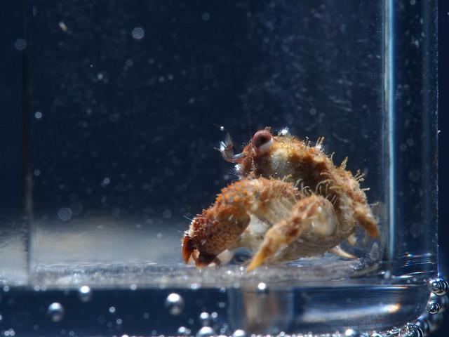 P3131887 螃蟹