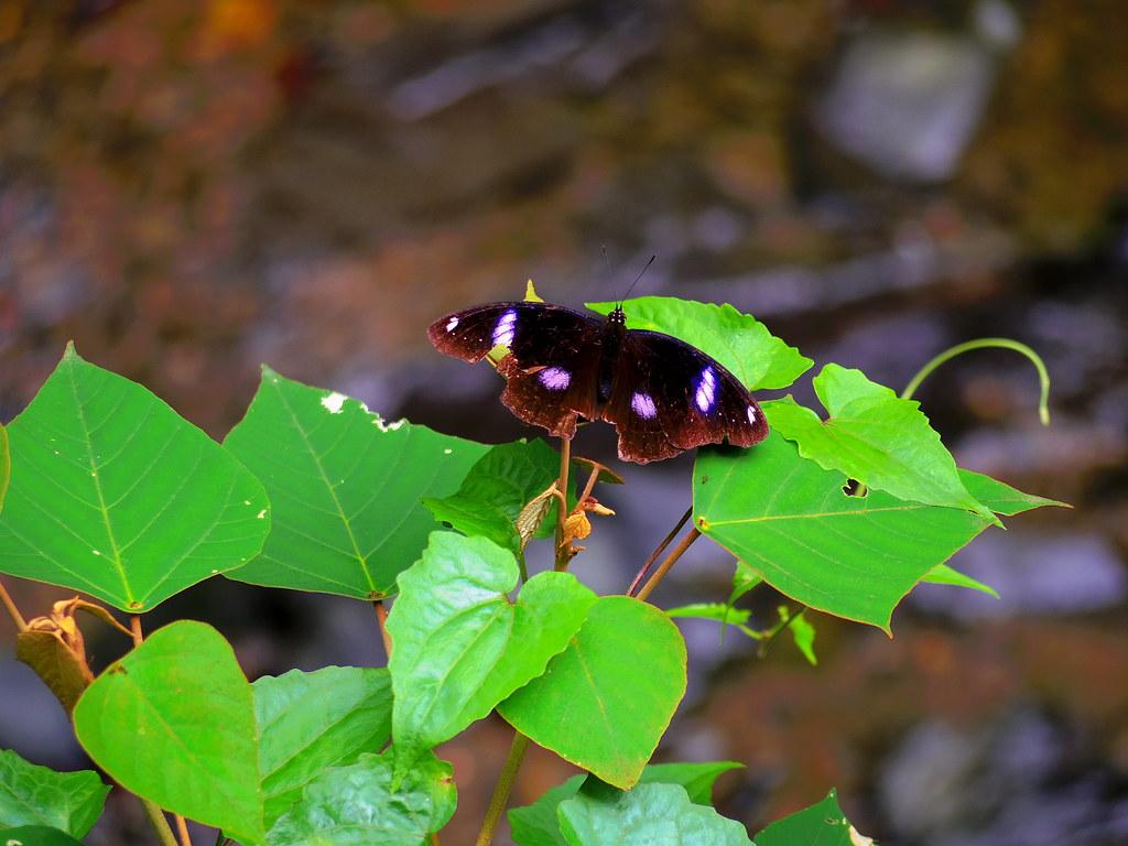 涼山瀑布拍蝴蝶