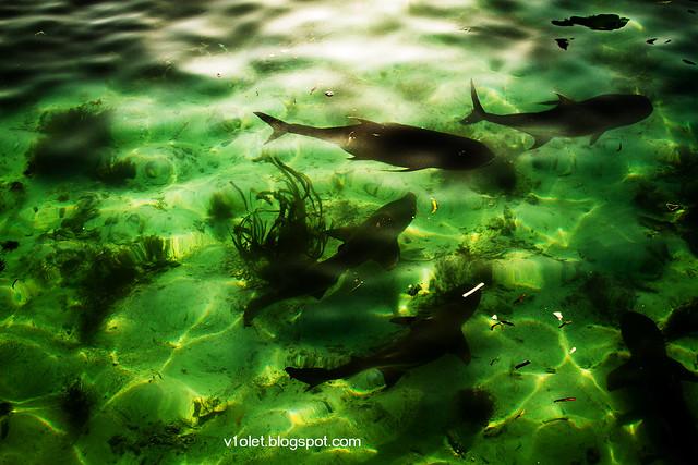Nusa Karamba Ikan3-2276rw