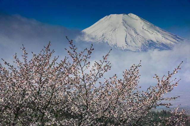 Spring Fuji