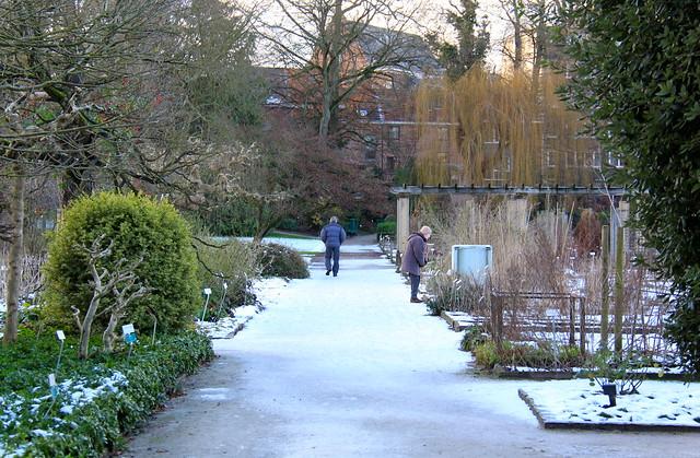 winter in de Leuvense Kruidtuin