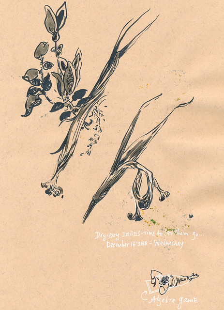 Sketchbook #93: Dry Irises