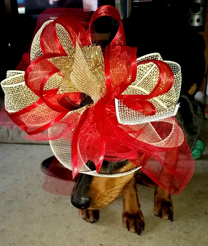 #dobermanpuppy #rescueddog #adoptdontshop #dobemix #LapdogCreations ©LapdogCreations