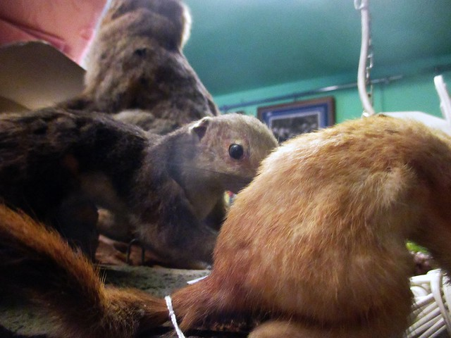 Thrift Shop Taxidermy