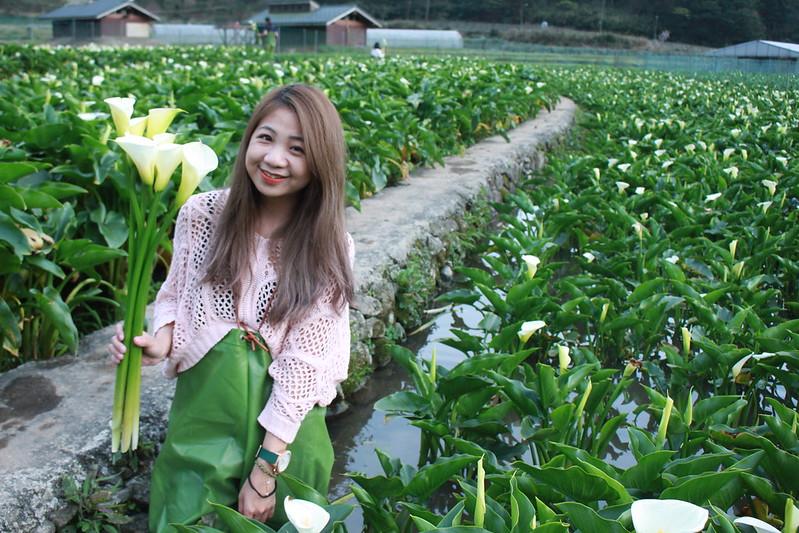 竹子湖採海芋-17度C隨拍 (59)