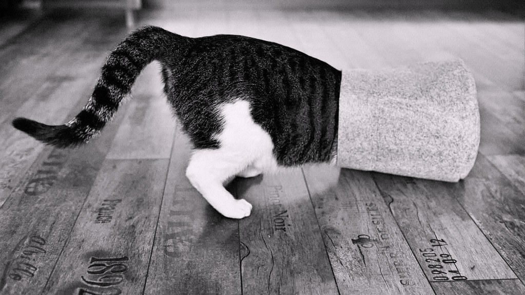 I'm #hidden ...Find me!