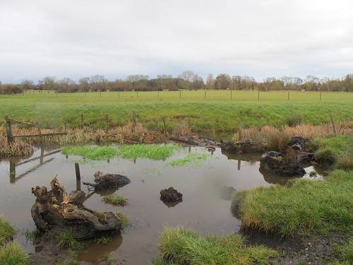 Test Meadows, just outside Romsey (II)