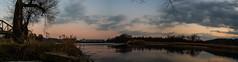 Die Aare kurz vor dem Zufluss in den Rhein