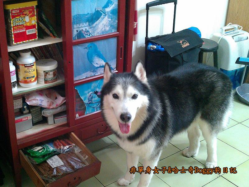哈士奇Doggy愛狗零食03