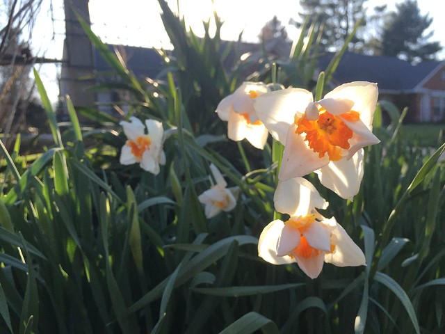 Garden Bloggers' Bloom Day: April 2016