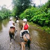 Riding through the #jungle by 100% #humidity. #costaricaadventures #horsebackriding :horse: