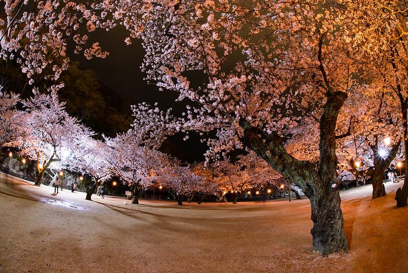 久松公園 2015-6