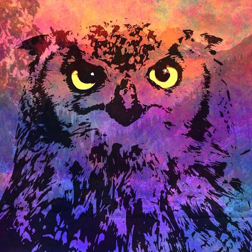 Owl digital collage