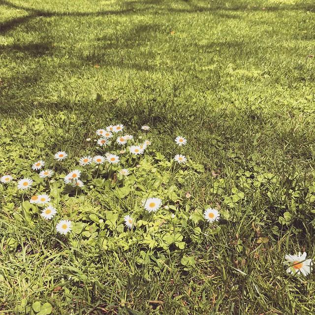 A primavera a chegar