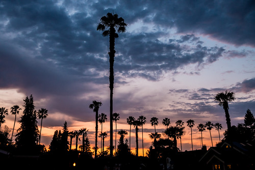Palms in the Hood