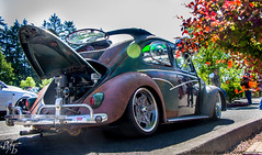 patina beetle
