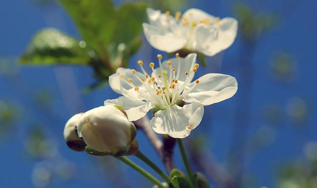 Rêver de printemps