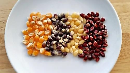 Farmer's Market Popcorn (4 varieties)