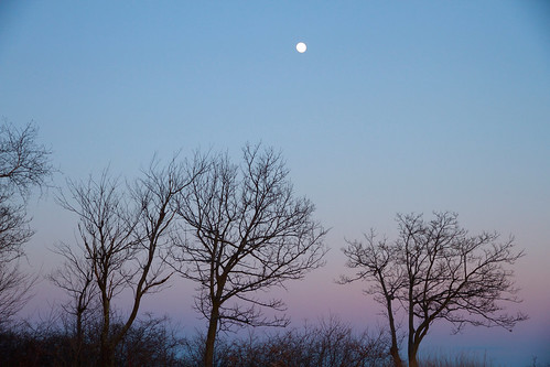 trees winter sunset sky moon mountain color evening twilight haze soft top branches horizon