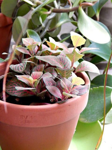 зелёное растение с розовыми полосками | Хорошо.Громко.