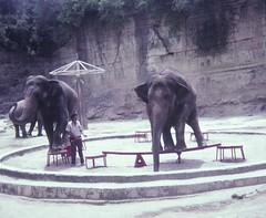 San Antonio Zoo - 1982