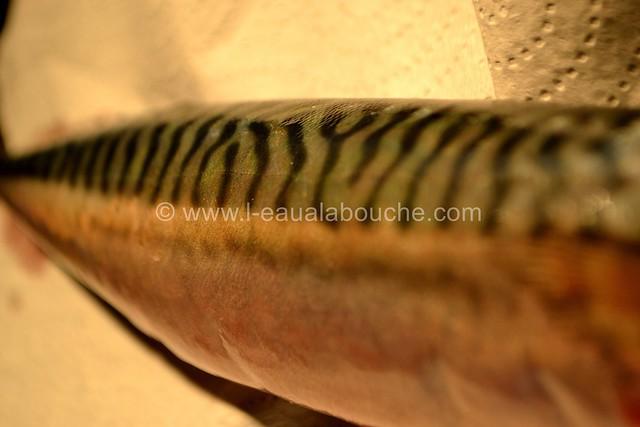 Maquereaux Grillés à la Plancha © Ana Luthi Tous droits réservés 0004