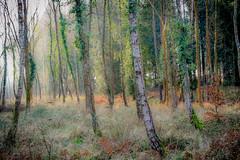 Rownhams Wood