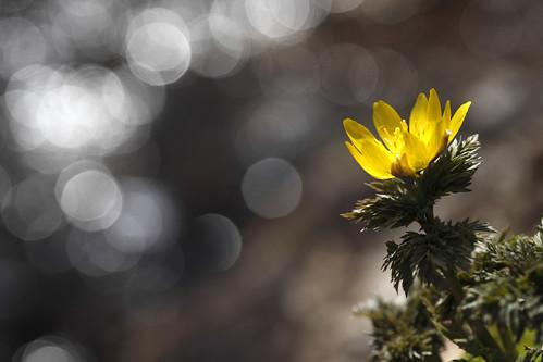 春の光を浴びて