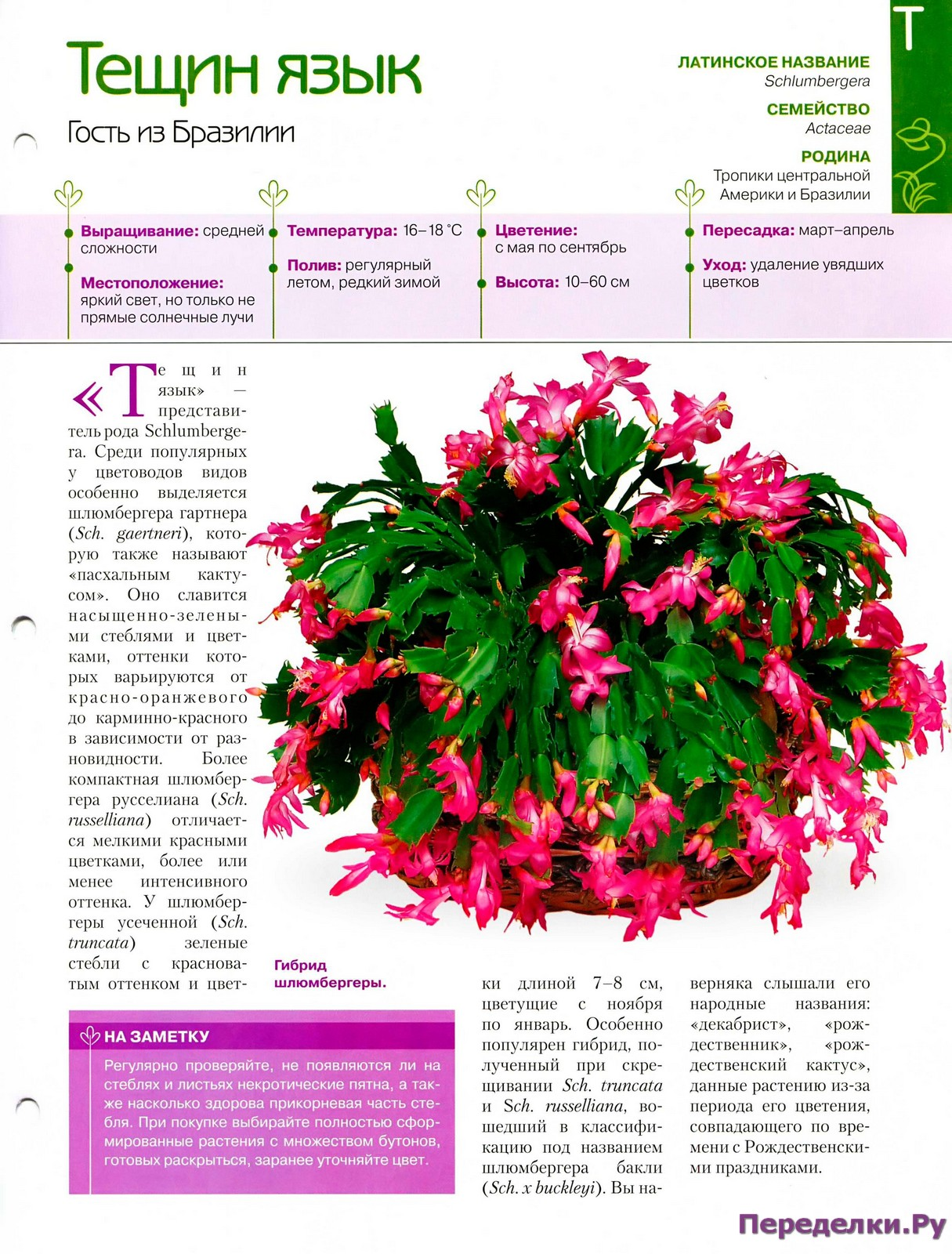Кактусы и суккуленты - Страница 2 25467429093_cb289dd0a6_o