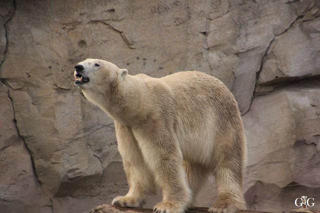 Zoo Bremerhaven 09.04.16 2.Teil87