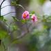 Camellia by shinichiro*