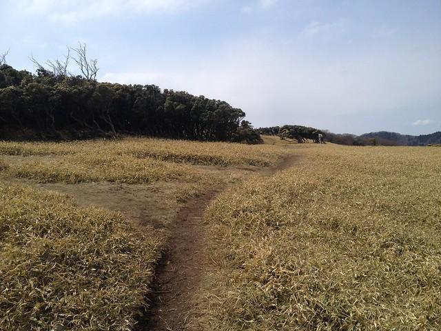 入道ヶ岳 北尾根 登山道
