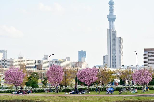 汐入公園の写真