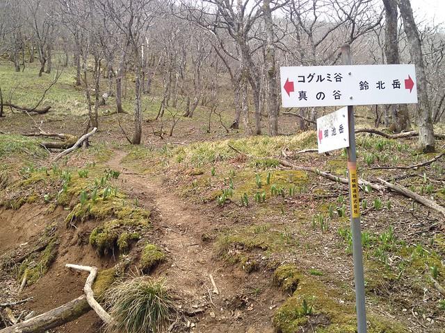 御池岳 コグルミ谷 御池岳・鈴北岳分岐