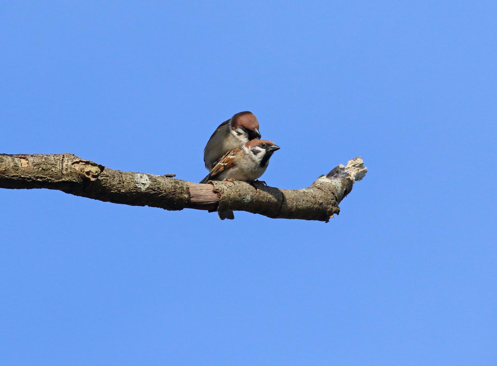 sparrowsetc0056 copy