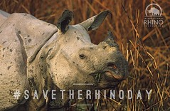 #SaveTheRhinoDay may be winding down but our work continues. Please consider supporting our field programs, learn more how you can help at rhinos.org. #teamrhino