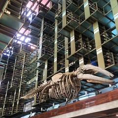 #GabrielOrozco #:whale2: #ArtPilgrimage