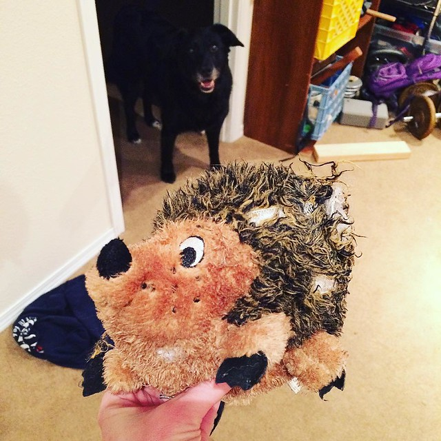 I suppose it was only a matter of time before Maggie tore her new friend apart...RIP, hedgehog!