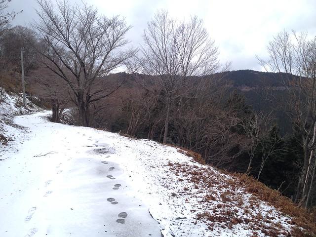 池田山 林道