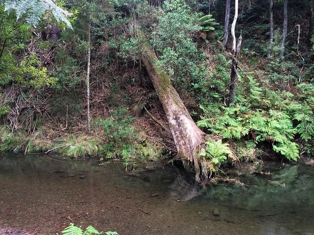 River alongside paradise picnic ground