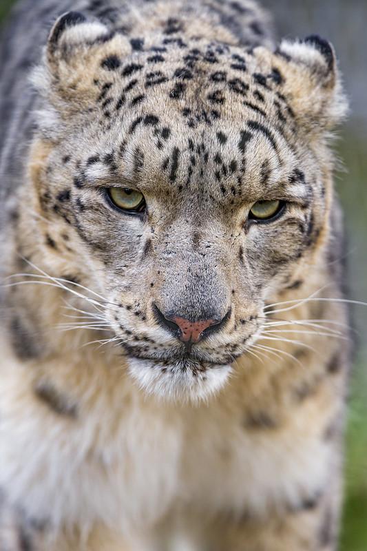 Close up of Pator