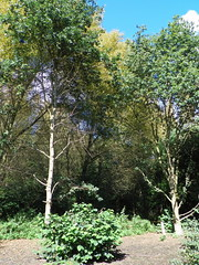 GOC Walthamstow to Stratford 127: Wick Wood, Hackney