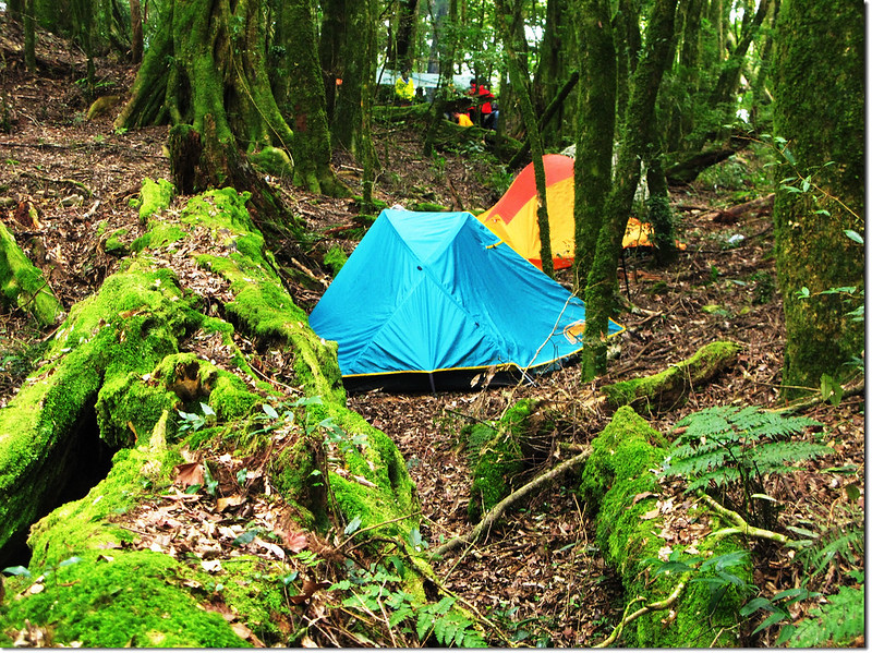 魔幻森林營地 4