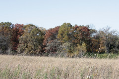 colorful trees in the distance, light brown grasses waving in the foreground