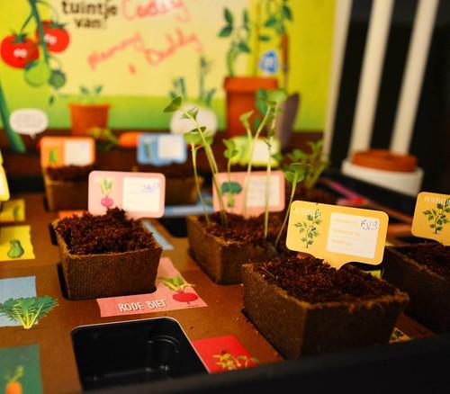 Our vegtables are starting to grow #moestuintje #albertheijn #veggies #collection #growing #garden #broccoli #parsley #courgette #cucumber #planting #holland #irishinholland #irishabroad #netherlands #dongen