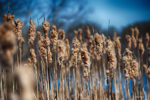 blue nature iso200 nikon wind live dream noflash desire leftovers f28 notripod 12000 tolive 105mmf28vr igordanilov