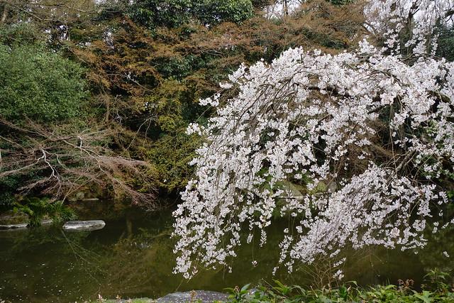 2016/03 京都御苑 #03