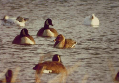 BJ Rose, Bean Goose, Nebraska