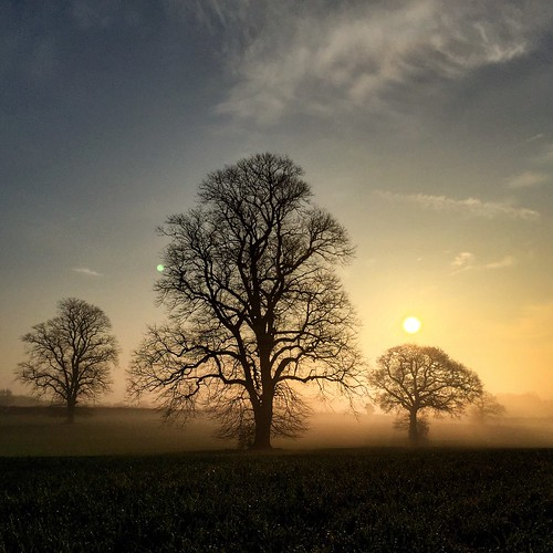 trees mist weather misty sunrise walking landscape atmospheric 366 ticknall scottsimpson southderbyshire iphone6
