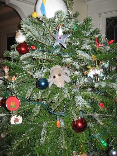 Christmas Tree Mite